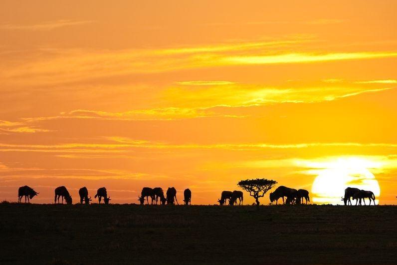 796bigstock-African-Sunrise-7133538-2-1-1