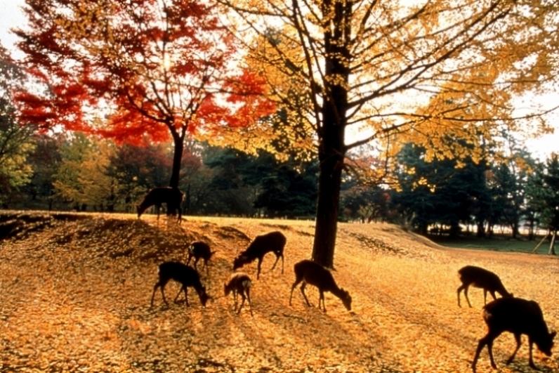 Kyoto-Deer-Park
